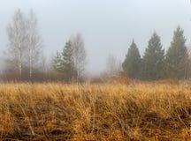 在早期的春天增长与一棵老草在有雾的早晨的领域 库存图片