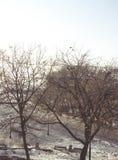 在早期的春天期间,停放与树和鸟的顶视图照片 库存图片