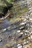 在早期的春天流动一条小小河用清楚的水 库存图片