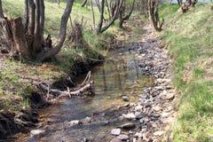 在早期的春天流动一条小小河用清楚的水 免版税库存图片