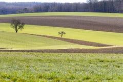 在早期的春天的田园诗农业风景 免版税图库摄影