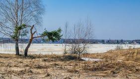 在早期的春天解冻的第一雪 库存照片