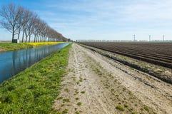 在早期的春季的五颜六色的荷兰农村风景 免版税库存图片