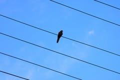 在早期的有雾的早晨鸟坐输电线 免版税库存照片
