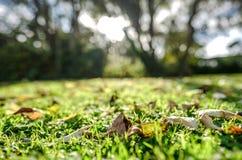 在早期的秋天期间,在看见的下落的叶子底层视图切开草坪 免版税库存图片