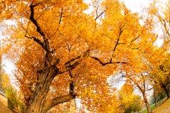 在早期的秋天的树 图库摄影