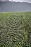 在早winter_10的台阶麦子 免版税图库摄影
