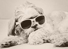在时尚玻璃的滑稽的狗 免版税库存照片