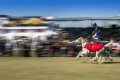 在时期的Nihang锡克教徒的骑马2马 库存照片