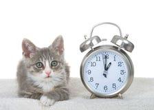 在时钟旁边的平纹小猫在羊皮床,夏令时概念上 图库摄影