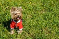 在时髦的成套装备和理发的一条逗人喜爱的狗 免版税图库摄影