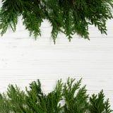 在时髦的白色土气木backgro的绿色树枝框架 库存图片