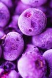 在时髦紫外颜色的充满活力的结冰的蓝莓与美好的弗罗斯特样式和纹理 夏天食物背景 库存图片