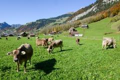 在昂热尔贝格村庄的农村风景瑞士的 免版税库存照片