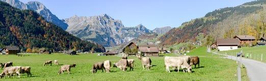 在昂热尔贝格村庄的农村风景瑞士的 免版税库存图片