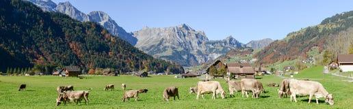 在昂热尔贝格村庄的农村风景瑞士的 库存照片