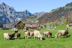在昂热尔贝格村庄的农村风景瑞士的 库存图片