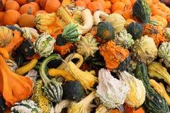 在明亮和五颜六色的南瓜看的秋天的富饶秀丽在农夫市场上 库存照片
