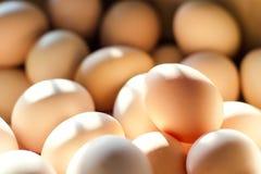 在明亮的光的许多新鲜的鸡蛋 背景 免版税库存照片