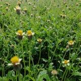 在明亮的天光的草花 免版税库存照片