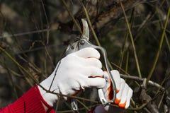 在明亮的手套春天的修剪 免版税图库摄影