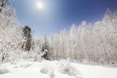 在明亮的月光的斯诺伊风景 免版税库存图片
