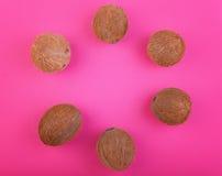 在明亮的桃红色背景的椰子 维生素 以圈子的形式整个椰子 新鲜的椰树,顶视图 夏天果子 免版税库存照片