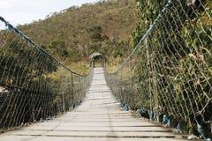 在明亮的森林自然构成的桥梁 面包渣 库存图片