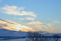 在明亮的毛皮红色星期日之上日落冠上结构树冬天 河的看法 库存图片