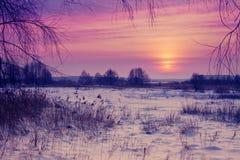 在明亮的毛皮红色星期日之上日落冠上结构树冬天 库存照片