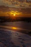 在明亮的毛皮红色星期日之上日落冠上结构树冬天 免版税图库摄影