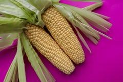 在明亮的流行粉红背景的黄色甜玉米 库存图片