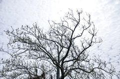 在明亮的美丽的天空的树剪影与阳光 免版税库存图片