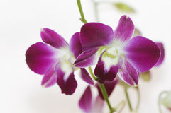 在明亮的背景的紫色兰花 免版税库存图片