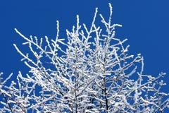 在明亮的蓝天的霜盖的树 免版税库存照片