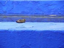 在明亮的蓝色和浅兰的墙壁上的一只青蛙 免版税图库摄影