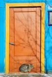 在明亮的被绘的门附近的毛茸的猫在冬天 免版税库存照片