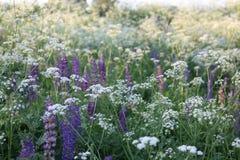 在明亮的野花 免版税图库摄影