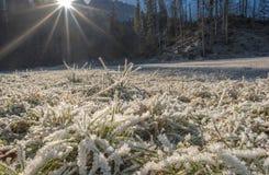 在明亮的阳光下的冻草 免版税图库摄影
