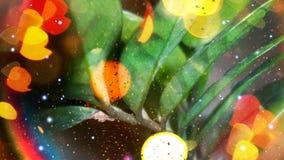 在明亮的颜色的花 图库摄影