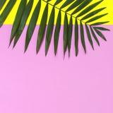 在明亮的黄色桃红色背景的热带棕榈叶 r 夏天背景,自然 创造性最小 库存图片