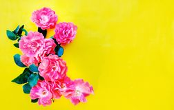 在明亮的黄色的小玫瑰 免版税图库摄影