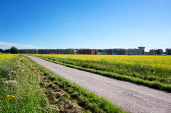在明亮的黄色油菜籽之间的领域的小路在夏天 免版税库存图片