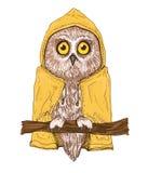 在明亮的黄色雨衣的五颜六色的棕色猫头鹰 免版税库存图片