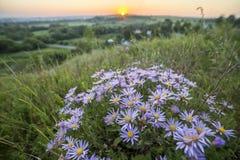 在明亮黄色金黄上升点燃的高词根的开花的白色蓝色野生雏菊在天际太阳 库存照片
