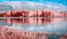 在明尼苏达河的路易斯维尔沼泽Trailhead 免版税库存图片