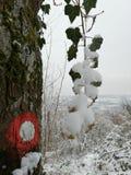 在明显的树的斯诺伊常春藤 库存照片