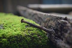 在易碎的木头困住的老铁钉子 免版税图库摄影