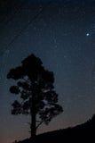 在星前面的树Silouhette 免版税库存照片