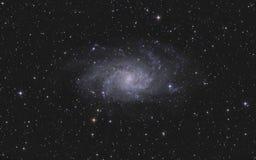 在星座Triangulum的Triangulum星系 免版税库存照片